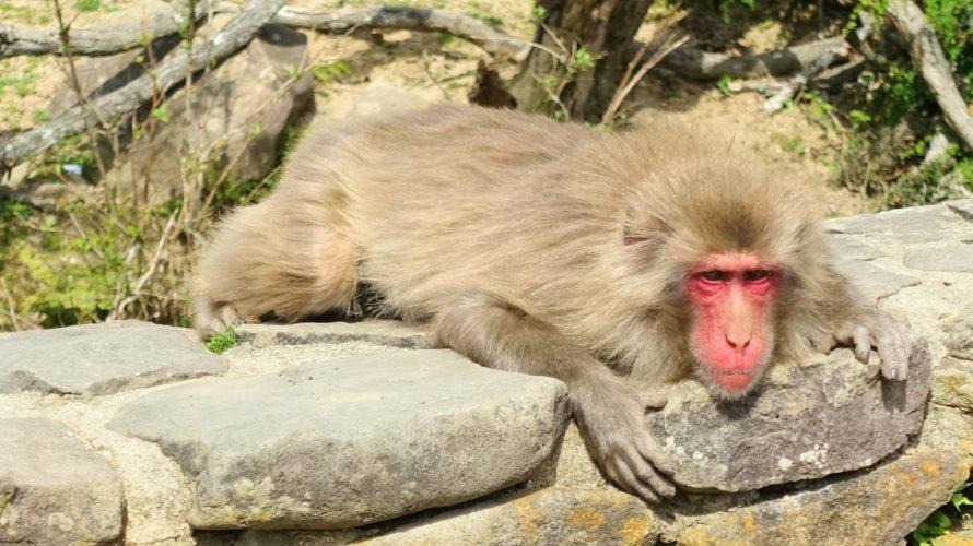 小豆島のお猿の国に行ってみた
