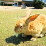 700羽を超えるウサギに出会える大久野島に行ってみた