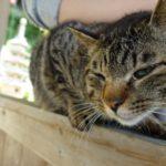 猫に会える川崎観音に行ってみた