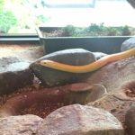 岩国シロヘビの館に行ってみた