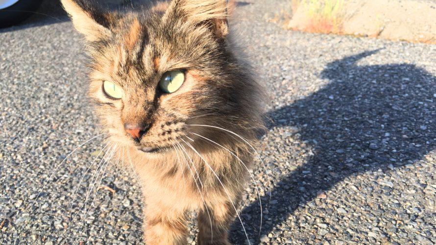たくさんの猫にも出会える王子が岳に行ってみた